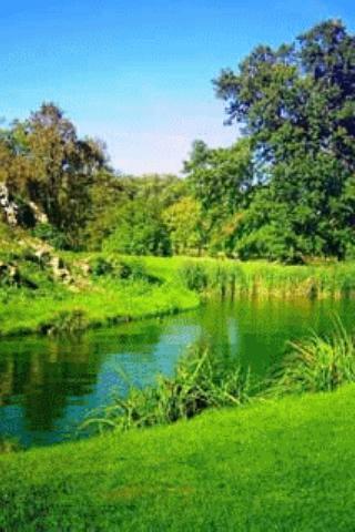 River In Green Scenary Live Wa