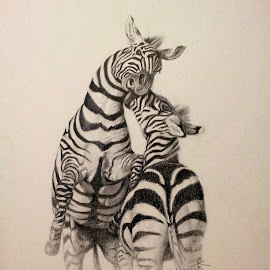 Two Zebras by Alfonso Rahardja - Drawing All Drawing