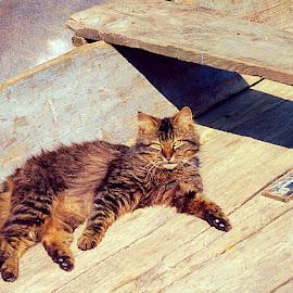 Enjoying the sun by Žaklina Šupica - Animals - Cats Portraits