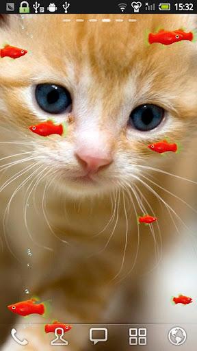 レッドプラティと子猫★LIVE壁紙