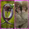 Unik & Mesra...! Foto Kasih Sayang Versi Hewan...  (Gambar 2)