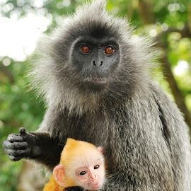 monkeys by Woo Yuen Foo - Animals Other