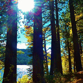 by Samantha Linn - Nature Up Close Trees & Bushes (  )