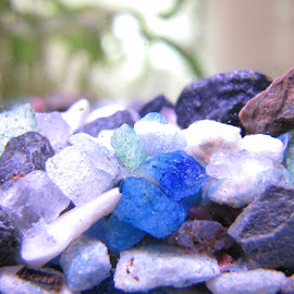 by Darius Morgendorfer - Nature Up Close Rock & Stone ( water, underwater, colors, fish, pets )