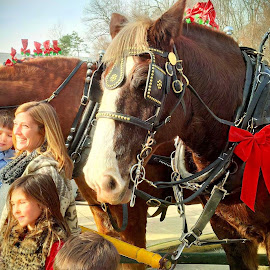 Holiday Horses by Cecilia Sterling - People Family
