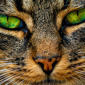 cat face close crop green eyes ed oct 2014.jpg