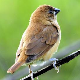 Cute by Sankaran Balaji - Animals Birds