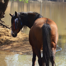 by Silke Jordaan - Novices Only Pets ( water, natural light, sweet, dam, horse, sun )