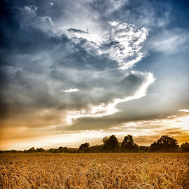 Field by Joern Fellenberg - Landscapes Prairies, Meadows & Fields ( wheat, clouds, field, sky, blue, brown )