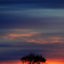 Tree by Velvetdawn Custer - Landscapes Sunsets & Sunrises ( clouds, winter, tree, colors, rise, snow, sun )