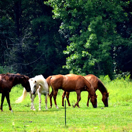 Can't Tame Me ! by Linda Blevins - Animals Horses
