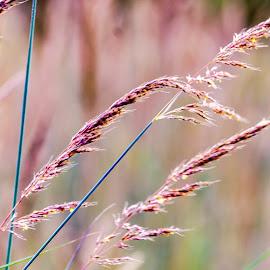grass by Vaibhav Jain - Nature Up Close Leaves & Grasses ( grass, stem, leaf, leaves,  )