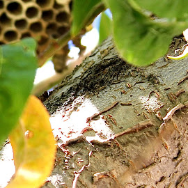 by Cora Hernandez - Nature Up Close Hives & Nests