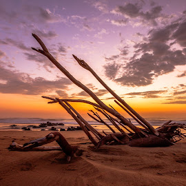 Stranded by Carl Müller - Landscapes Beaches ( clouds, sand, driftwood, beach, sunrise )