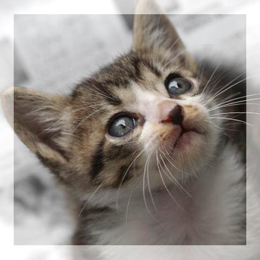 Catskurukuru LOGO-APP點子