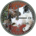 Cat 4 WallCat Analog Clock icon
