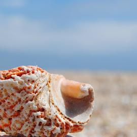...time... by Arina Avramescu - Nature Up Close Sand