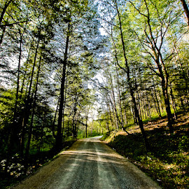 Down a Tennessee road by Eyecbeauty Miller - Landscapes Travel ( road trip, dirt road, tennessee, trees, back road, woods, travel photography )