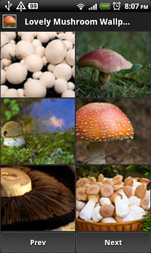 免費媒體與影片App|Lovely Mushroom Wallpapers|阿達玩APP