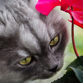 by April Nowling - Animals - Cats Portraits ( cat, leo, kitty, flower, animal, colorful, mood factory, vibrant, happiness, January, moods, emotions, inspiration )
