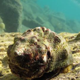 by Yildirim Gencoglu - Animals Sea Creatures ( underwater, sea, underwaterphotography, waterlust, aegean )