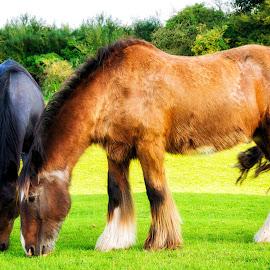 by Martin Tyson - Animals Horses ( horses, horse )