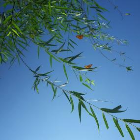rama rama by Ully Zoelkarnain - Nature Up Close Leaves & Grasses