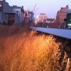 prarie grass