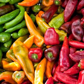 Lots of Peppers by Kelvin Watkins - Food & Drink Ingredients ( peppers, red, bright, food, green, spicy, yellow )