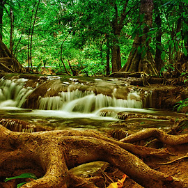 Tree by the waterfall by Prowpatareeya Sithisarn - Nature Up Close Trees & Bushes ( nature, tree, waterfall, thailand, forest, national-park, woods )
