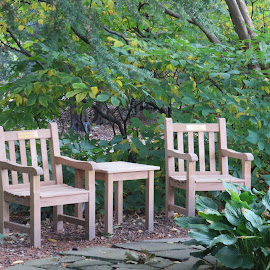 Garden Chairs by Marcia Taylor - Novices Only Objects & Still Life (  )