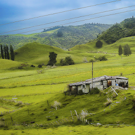 Green New Zealand by Nancy Merolle - Landscapes Prairies, Meadows & Fields ( sheep barn, barn, rotarua, grass, shack, green, nz, landscape, new zealand,  )