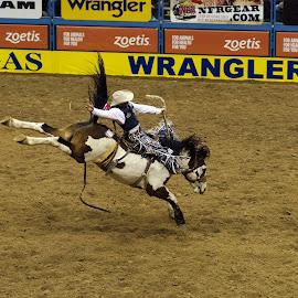 by Cristi Radulescu - Sports & Fitness Rodeo/Bull Riding