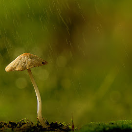 by Sirajuddin Halim - Nature Up Close Mushrooms & Fungi (  )