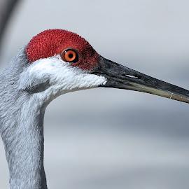 Sunday Mornings Best 19 by Terry Saxby - Animals Birds ( bird, terry, florida, zephyrhills, usa, saxby, nancy )