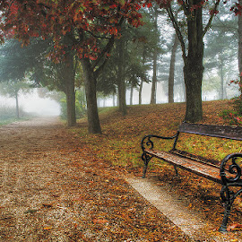 untitled by Zsolt Zsigmond - City,  Street & Park  City Parks ( bench, park, fog, autumn, fall, path, trees, leaves, mist,  )