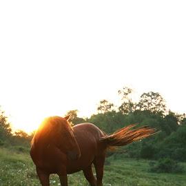 Natural beauty by Alexandra Nicolau - Animals Horses ( grass, sunset, green, horse, beauty, flowers,  )