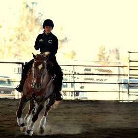 Reining by Sara Shelton - Novices Only Sports ( high school, horses, reining, drill team, competition )