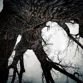 Tree Texture by Inspired  Foto - Nature Up Close Trees & Bushes ( #nature, #photo, #dark, #cool, #tree,  )