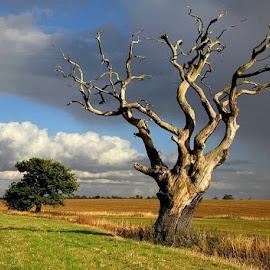 *** by Zanna Zaka - Landscapes Prairies, Meadows & Fields ( cambridgeshire, summer, weather, travel, landscape, morning )