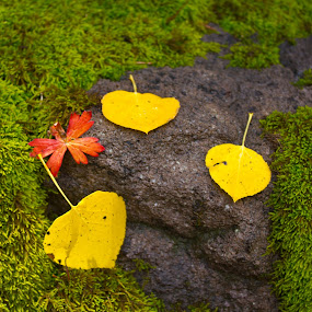 by David Short - Nature Up Close Leaves & Grasses ( fall leaves on ground, fall leaves, owel creek pass, color, deb's medow, fall, colorado )
