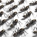 Ants icon