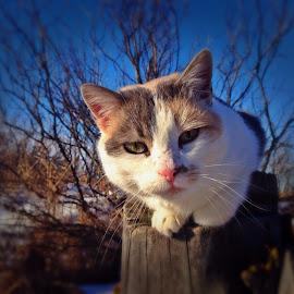 Angeline  by Tara Hodge - Animals - Cats Portraits ( #cat #feline #pet )