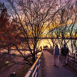 Off to the Sunset by Michael Last - City,  Street & Park  Vistas ( sky, boston, charles river, sunset, esplanade, city )