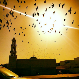 It always seemed to me a sort of clever stupidity only to have one sort of talent - like a carrier pigeon. #ramadankareem by Alejandro Domingo - Instagram & Mobile Android