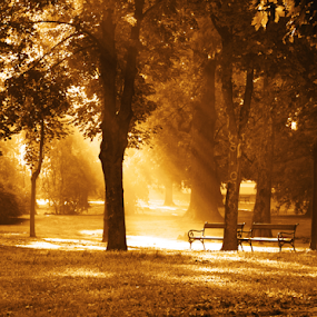 by Sanja Dedić - City,  Street & Park  City Parks ( , fall, color, colorful, nature )