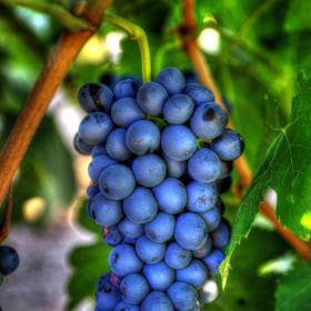 Temecula Winery 6758 Jul 22 2014And2more_tonemapped_edited-1.jpg
