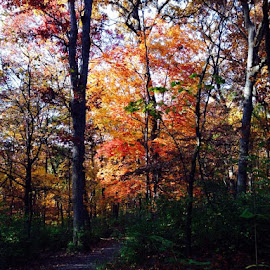 Beautiful walk at Powder Valley today. Even saw a deer! by Lori Fix - Landscapes Forests