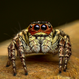 The Eyes 2 by Dave Lerio - Animals Insects & Spiders