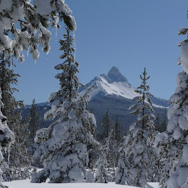 Sunny snow day by Connie Hoyt Tompkins - Landscapes Mountains & Hills